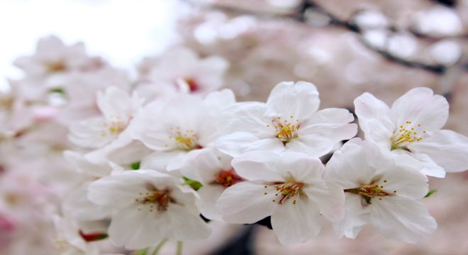 佐賀県の花見スポット