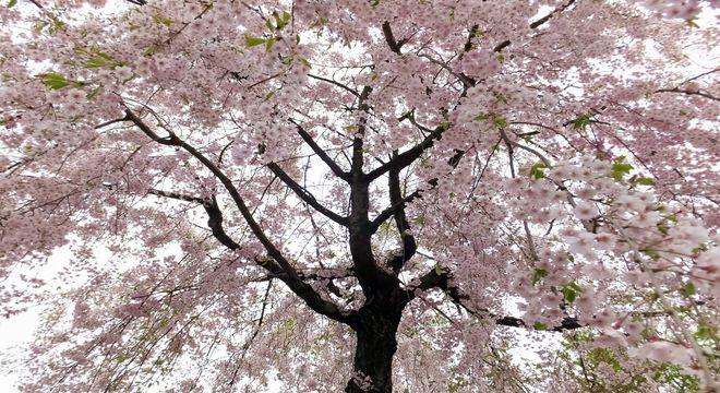 長崎県の花見スポット