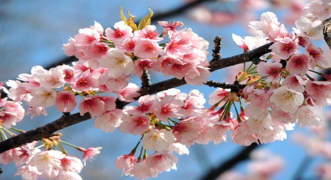 熊本県の花見スポット