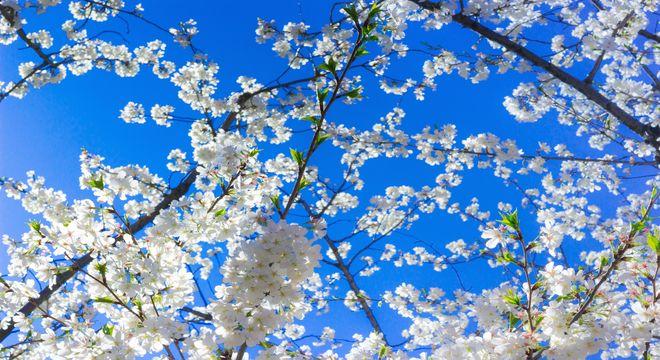 大分県の花見スポット