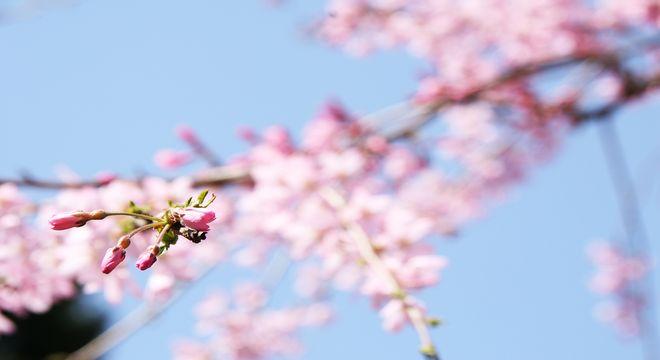 宮崎県の花見スポット