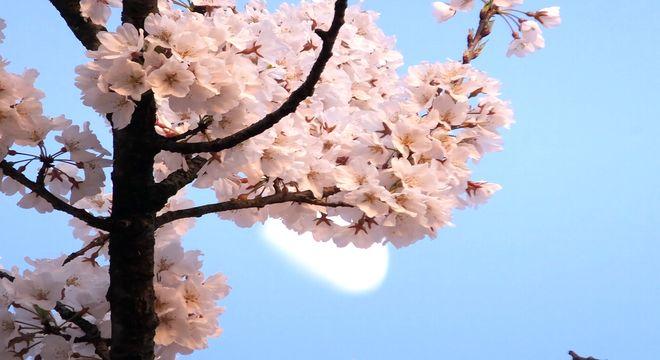 鹿児島県の花見スポット