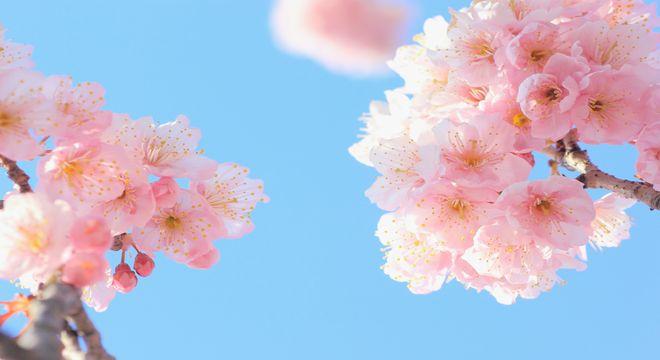 鳥取県の花見スポット
