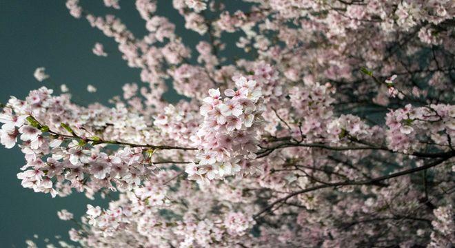 岡山県の花見スポット