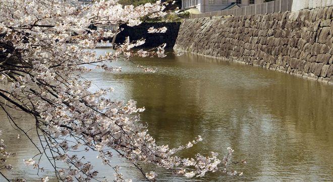 山口県の花見スポット