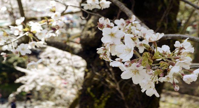 和歌山県の桜の名所