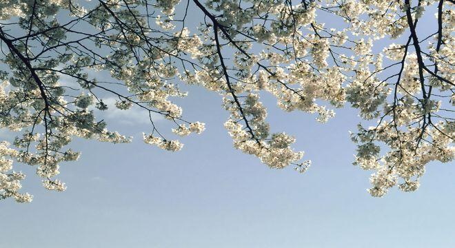 滋賀県の桜の名所