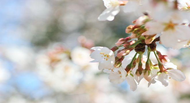 大阪の桜の名所