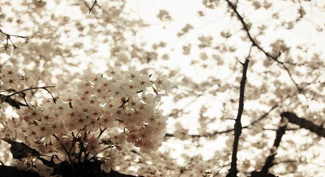 岐阜県の花見スポット