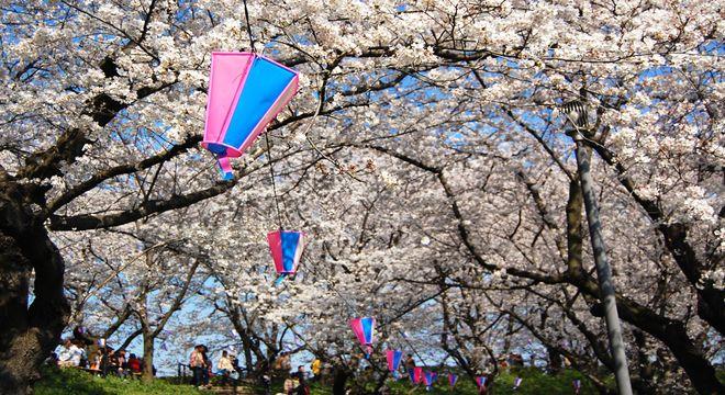 愛知県の花見スポット