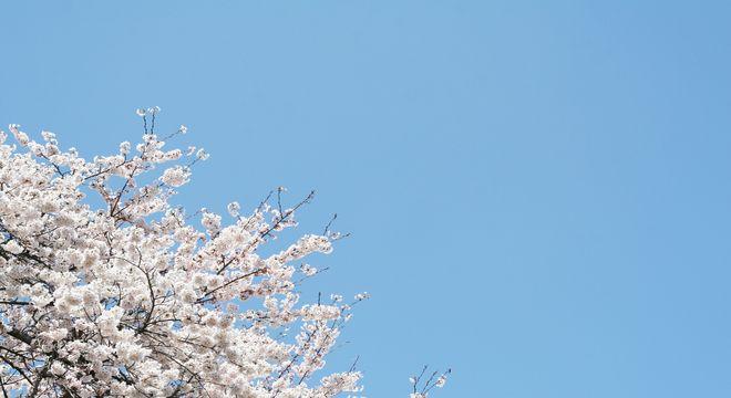 千葉県の桜の名所