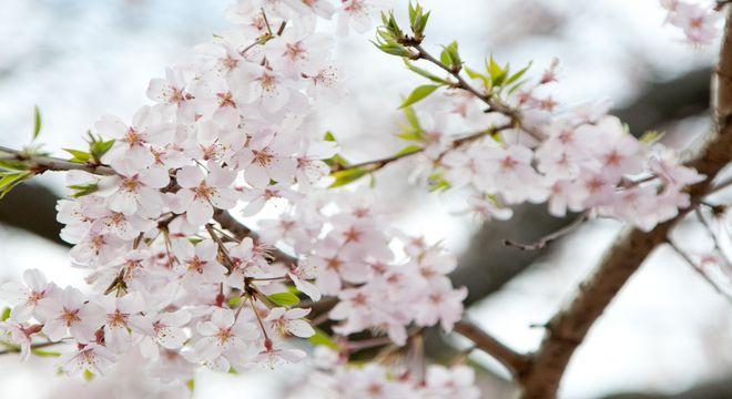 長野県の花見スポット