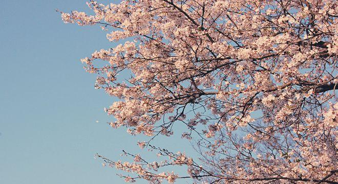 岩手県の桜の名所