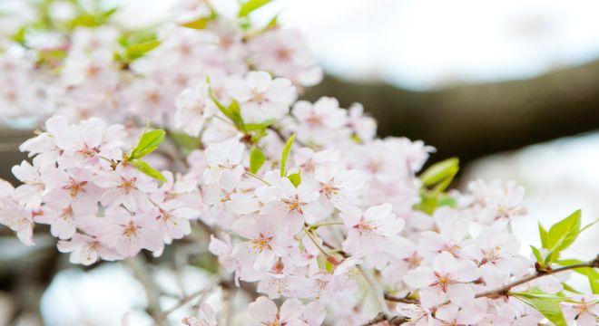 宮城県の花見スポット