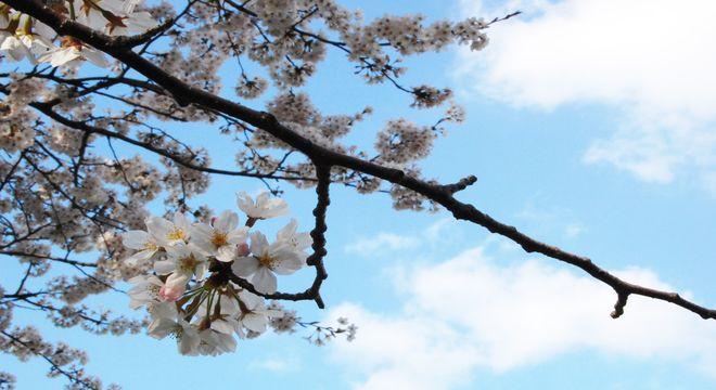 秋田県の花見スポット