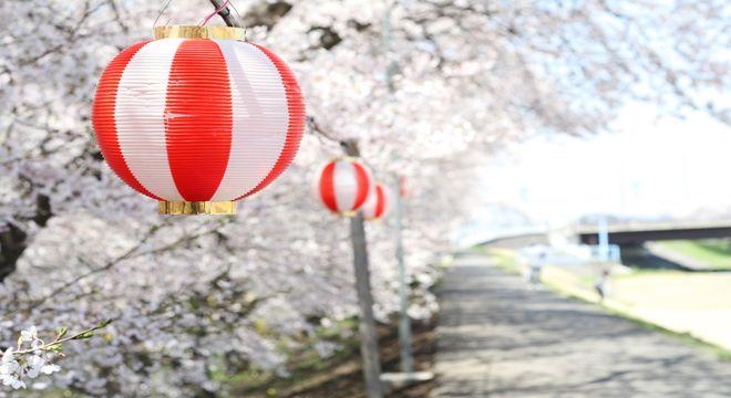 山形県の桜の名所