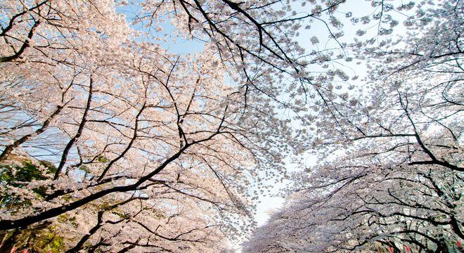 福島県の桜の名所