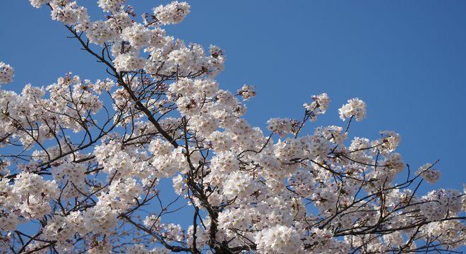 北海道の花見の名所