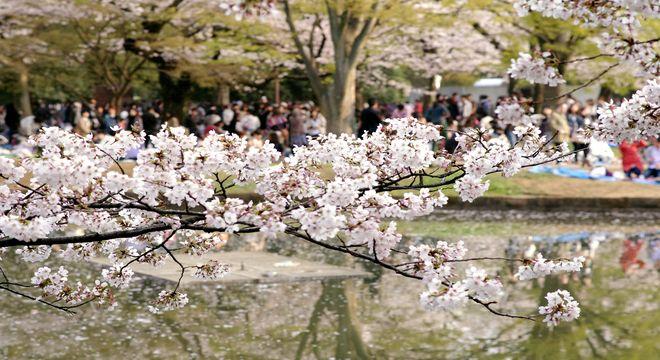 四国の花見スポット