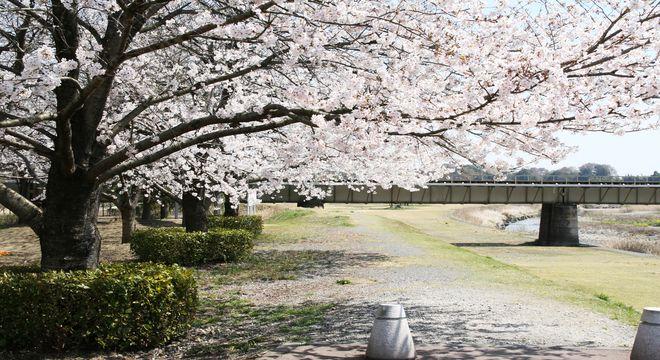 東海の桜の名所