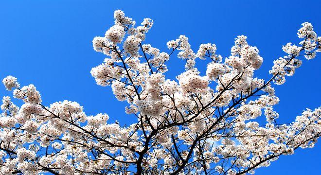 関西の花見スポット