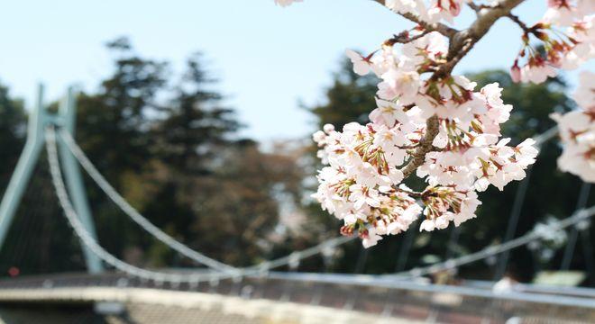 甲信越の桜の名所