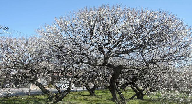 東京の梅の名所