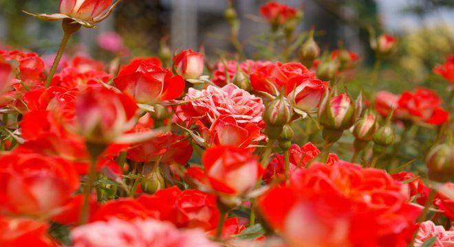 関東のバラの名所
