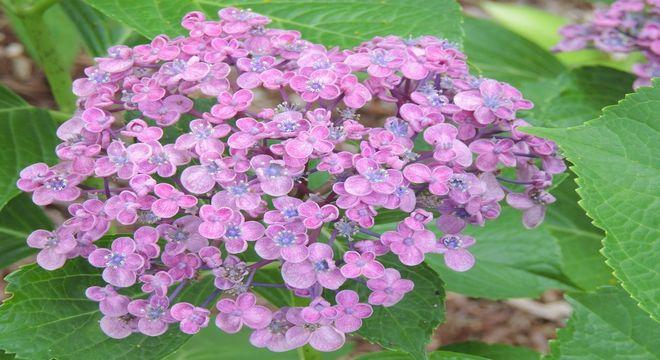神奈川県の紫陽花の名所