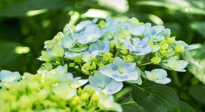 関東の紫陽花の名所
