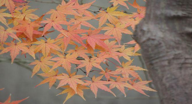 秋田県の紅葉スポット