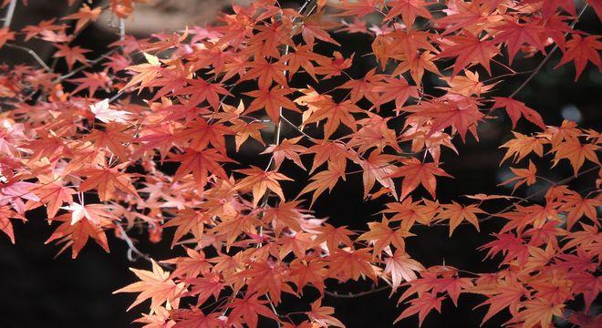 山形県の紅葉スポット