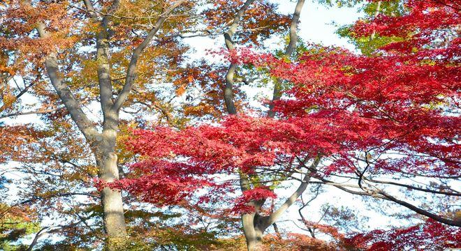 山梨県の紅葉スポット