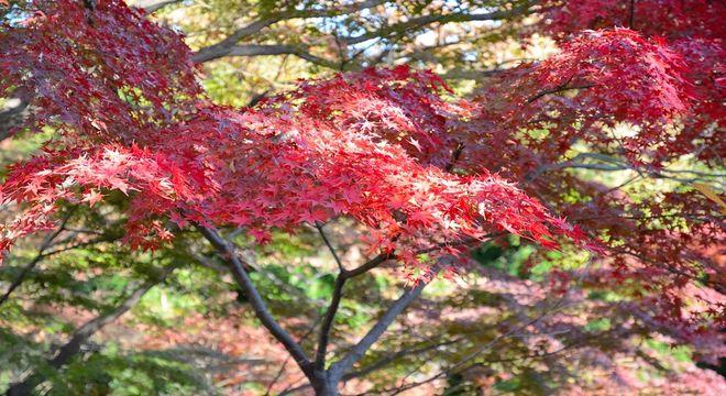 長野県の紅葉スポット