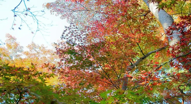 新潟県の紅葉スポット