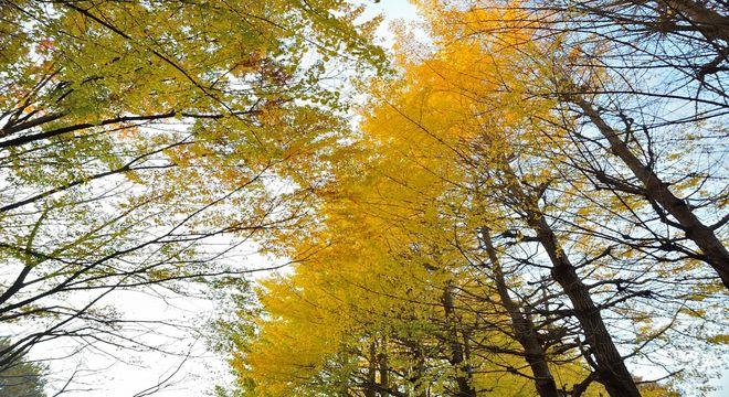 神奈川県の紅葉スポット