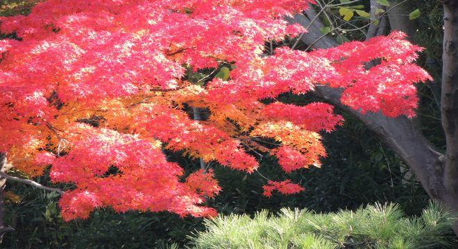 栃木県の紅葉スポット