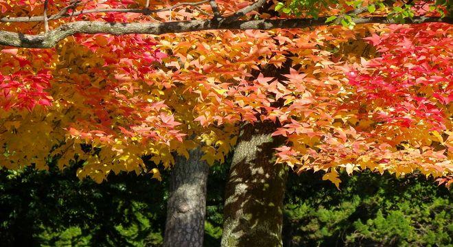 愛知県の紅葉スポット