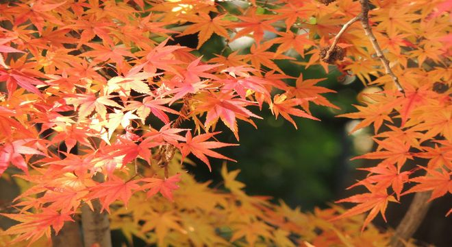 静岡県の紅葉スポット