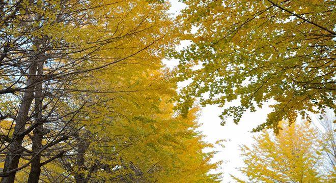 富山県の紅葉スポット