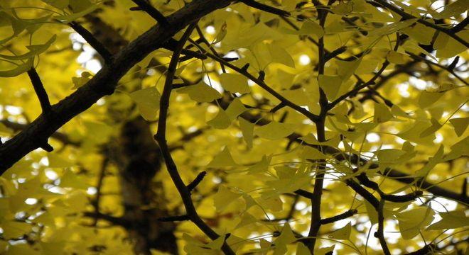 石川県の紅葉スポット