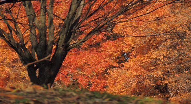 大阪府の紅葉スポット