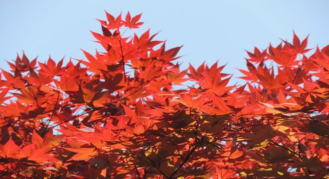 兵庫県の紅葉スポット