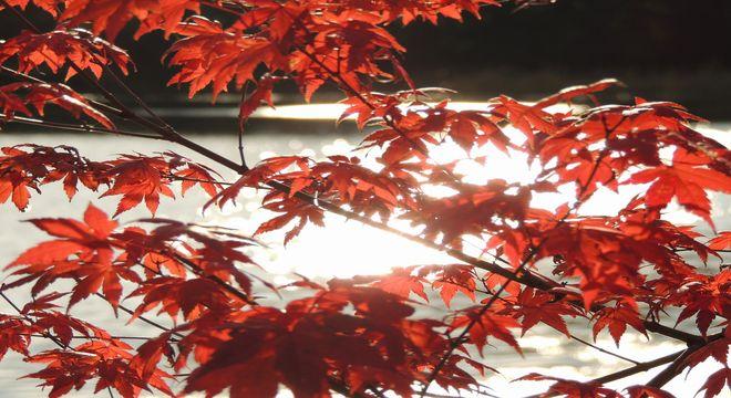 滋賀県の紅葉スポット