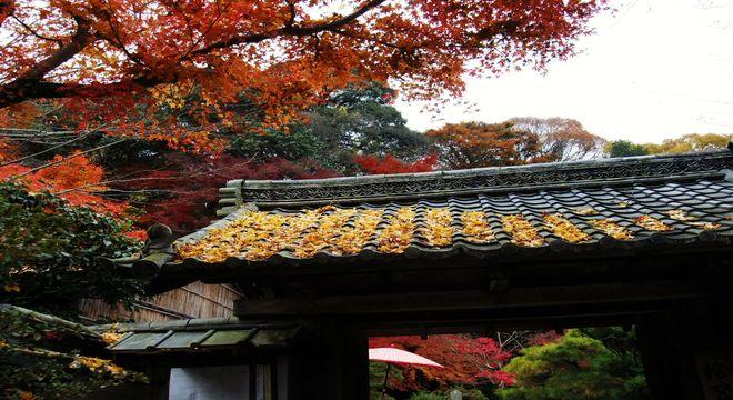 奈良県の紅葉スポット