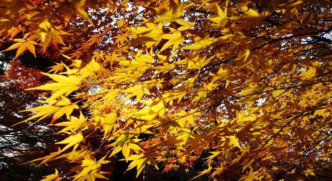 和歌山県の紅葉スポット