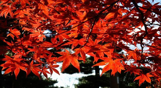 岡山県の紅葉スポット