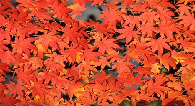 香川県の紅葉スポット