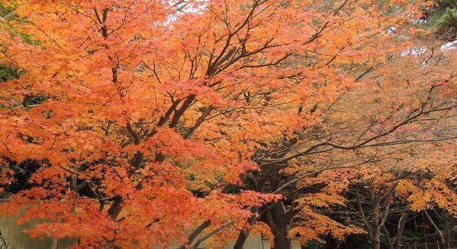 高知県の紅葉名所