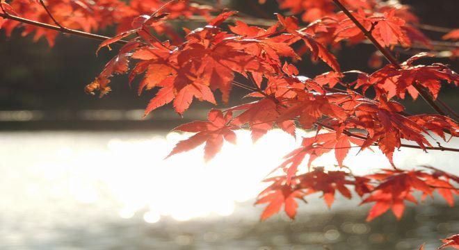 長崎県の紅葉スポット